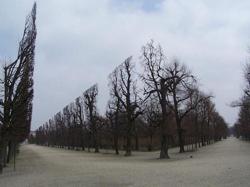 Default satisfying pics trees