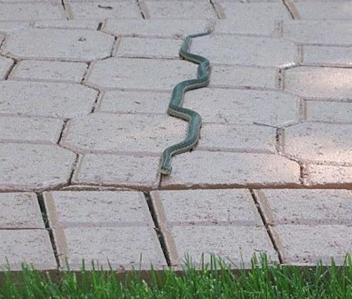Default satisfying pics snake