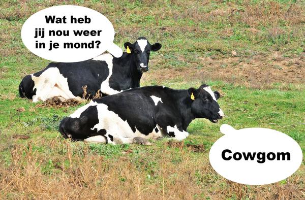 Default cowgom