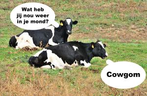 Small cowgom
